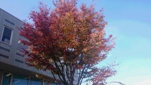 秋色です。